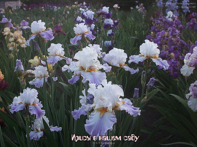Каталог цветов с фотографиями и доставка на посадку доставка цветов г.салават